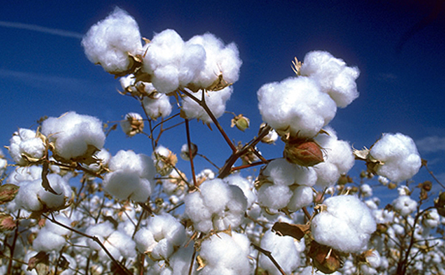 Cotton Fiber Properties